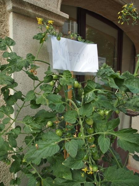 ma010813_tomaatti001